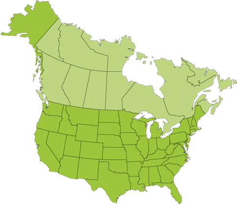 U.S. and Canada Map Icon
