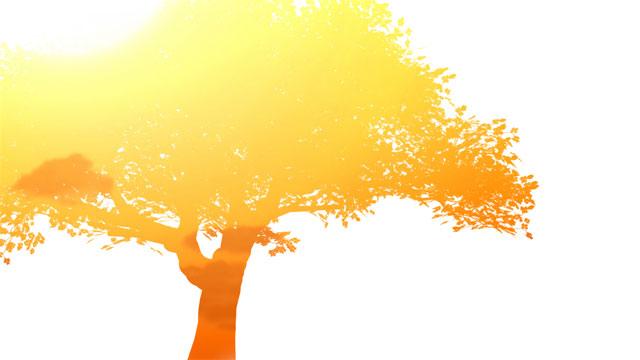 Image of an orange tree